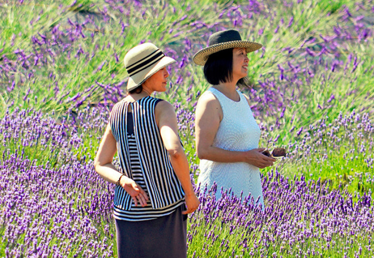 Handcrafted Pelindaba Lavender Products made on our organic