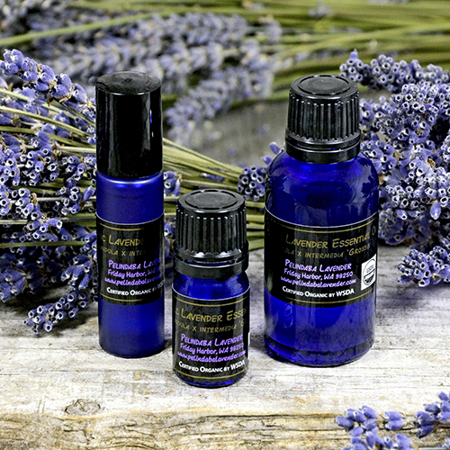 Lavender For Therapy