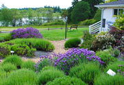 Demonstration Garden at Lavender Farm