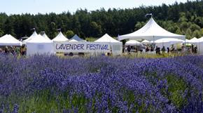 Lavender Festival - Pelindaba Lavender - Lavender Products