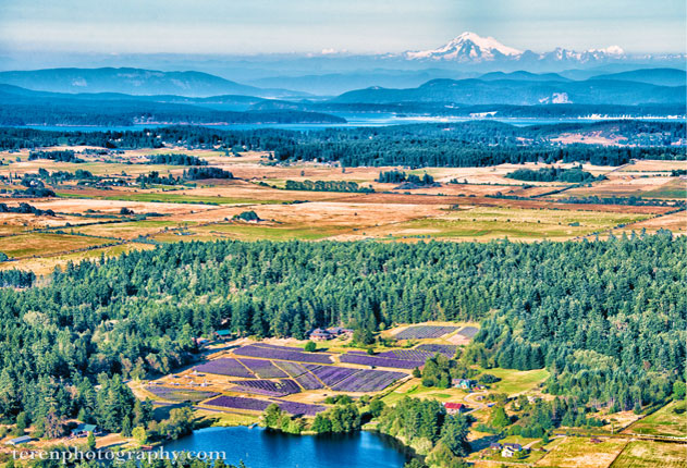 Pelidnaba Lavender Farm on San Juan Island Washington