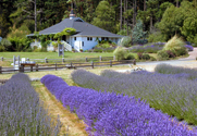 Gatehouse at Pelindaba Lavender Farm