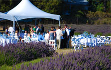 Lavender Wedding at Pelindaba Lavender Farm