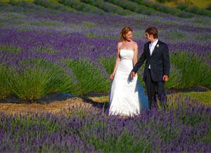 Lavender Wedding Pictures at Pelindaba Lavender Farm